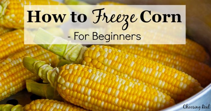 Freezing corn is an economical way to preserve the harvest. Here is a step-by-step tutorial for how to freeze corn.